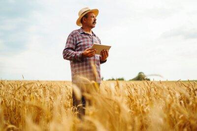 Naklejka Modern agriculture technology. Smart farming concept. Farmer checking wheat field progress, holding tablet using internet.