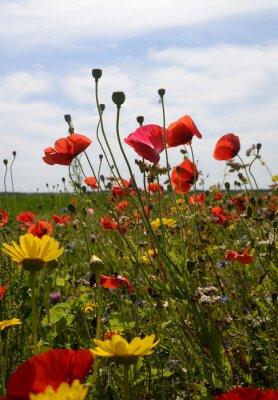 Mohn und Sonnenblumen