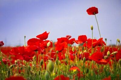 Naklejka Mohnblumen - Poppy Pole