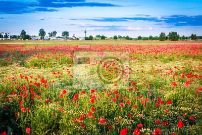Mohnblumenwiese mit Dorf und Stadt im Hintergrund - pole maku