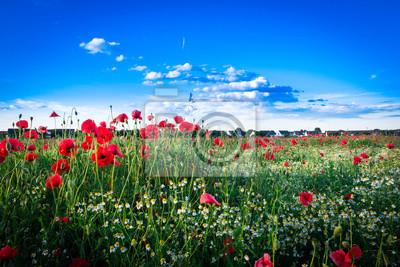 Mohnblumenwiese mit Einfamilienhäusern im Hintergrund - pole maku