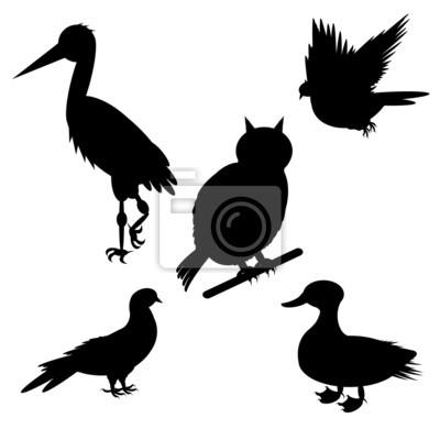 Monochromatyczne sylwetki różnych gatunków ptaków