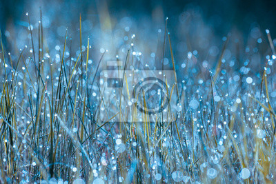 Morning dew on the grass. Nature background. Grass texture. Spring and summer concept
