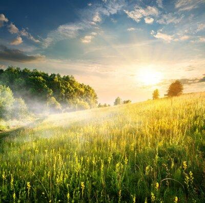 Naklejka Morning over blossoming field