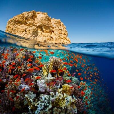 Naklejka Morze Czerwone
