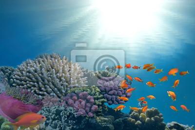 Naklejka Morze i słońce