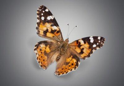 Naklejka Motyl.