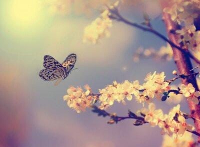 Naklejka Motyl i kwiat wiśni
