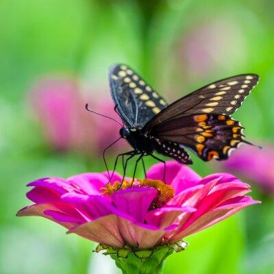 Naklejka Motyl na kwiat