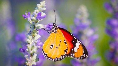 Naklejka Motyle i Kwiaty
