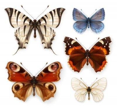 Naklejka Motyle, zestaw ikon wektorowych