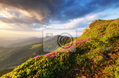 Naklejka Mountains during flowers blossom and sunrise. Flowers on mountain hills. Natural landscape at the summer time. Mountains range. Mountain - image