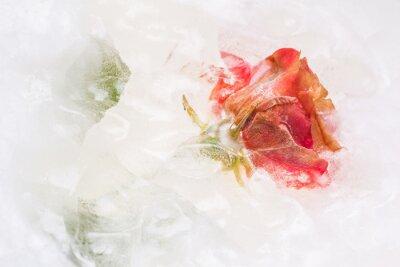 Naklejka Mrożone piękny czerwony kwiat róży