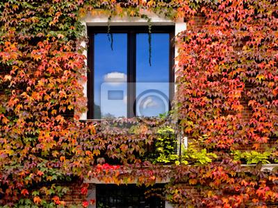 Mur z cegły z domu porośnięte liściach winogron. Abstract ba