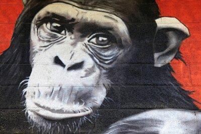 Naklejka mural z małpą na ścianie