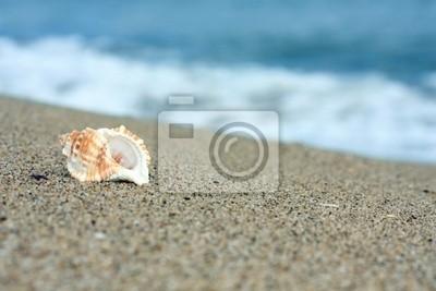 Muszla na plaży