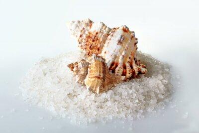 Naklejka Muszla na wzgórzu soli morskiej na białym tle