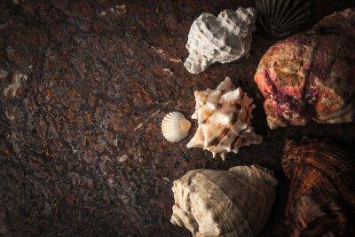 Naklejka muszle morskie na ciemnym tle kamienia