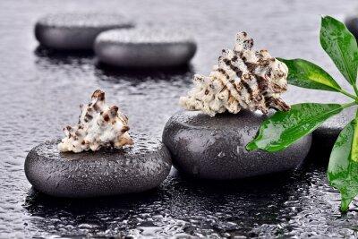 Naklejka Muszle na kamieniach bazaltowych