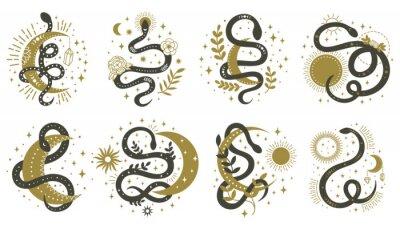 Mystical snakes. Floral boho and astrology minimalist elements with wriggling snakes vector illustration set. Magic spiritual snake symbols