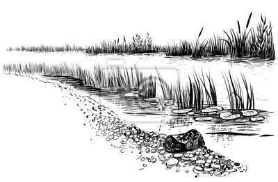 Naklejka Na brzegu rzeki lub bagna z trzciny i Ożypałka. Sketchy styl.