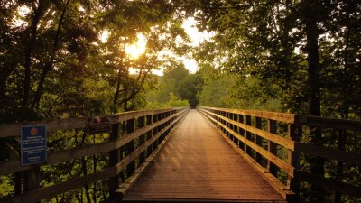 Naklejka Narrow wooden footbridge through forest trees at sunset