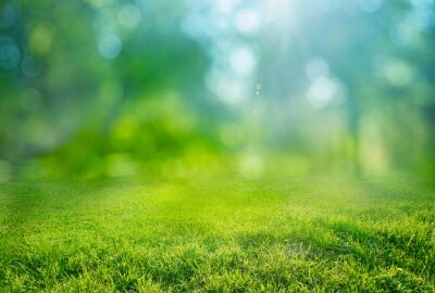 Naklejka natural grass background with blurred bokeh and sun