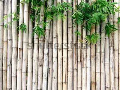 Naklejka Naturalny bambusowy tło