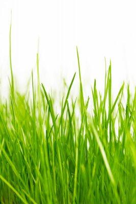 Naklejka naturalnym zielonym tle z selektywnej focus