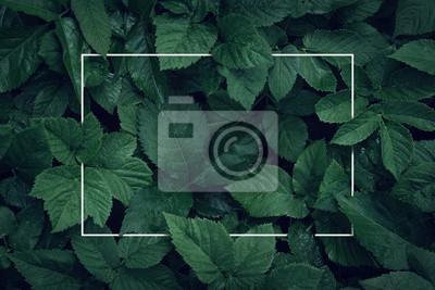 Naklejka Natury tło, abstrakcjonistyczna biel rama w liściach z kopii przestrzenią