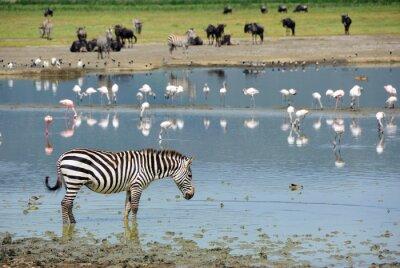 Naklejka Ngorongoro