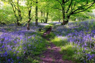Naklejka Niebieski dzwony lasu
