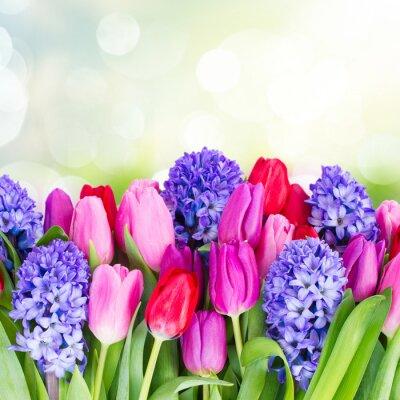 Naklejka niebieski hiacynt i tulipanów