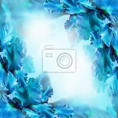 Niebieskie tęczówki przeciwko zielona trawa, lato motyl