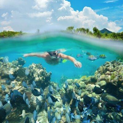 Naklejka Nurkowanie Snorkeler wzdłuż pięknej rafy koralowej