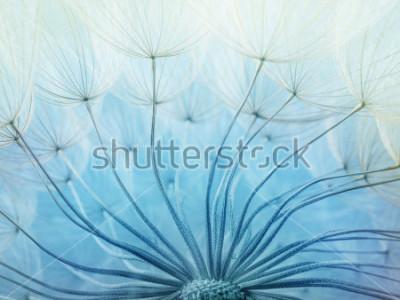 Naklejka Objęta makro- zdjęcie dandelion grain.