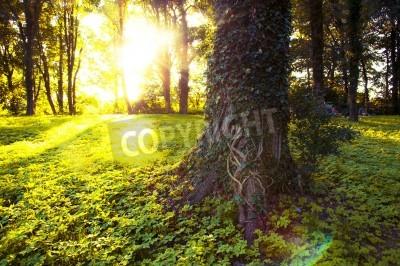 Naklejka Obraz lasu rano z promieni słonecznych