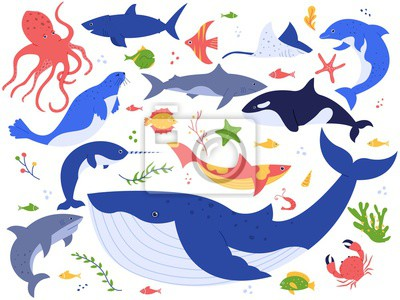 Ocean animals. Cute fish, orca, shark and blue whale, marine animals and sea creatures illustration vector set. Seaweed, algae, starfish and water plants isolated on white background