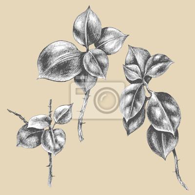 Oddziały tropikalnej rośliny z liśćmi.