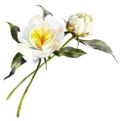 Naklejka Odosobniony akwarela bukiet białe peonie z liśćmi.