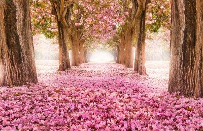 Naklejka Opadaj? Cego p? Atek nad romantycznym tunelu ró? Owego kwiatu drzewa / Romantyczny kwiat drzewa nad natur? T? Aw sezonie Wiosny / kwiaty Tle