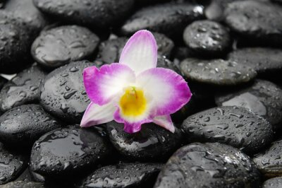 Naklejka orchid on wet black pebbles