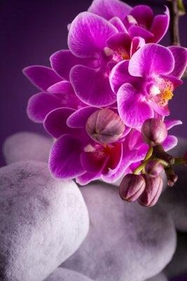 Naklejka Orchidea