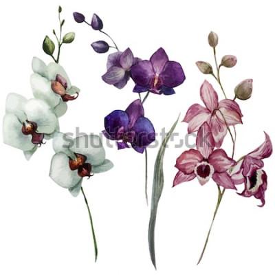 Naklejka orchidea, kwiat, akwarela