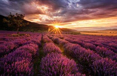 Naklejka Oszałamiający krajobraz z pola lawendy na wschód słońca