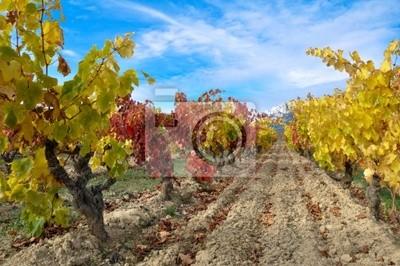 Naklejka otoño en la viña