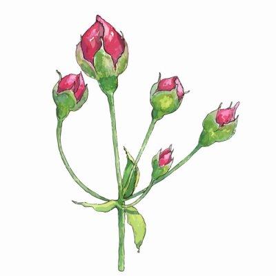 Naklejka pąki róży