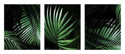 Naklejka Palm leaf. Tropical plants. Nature green color background.