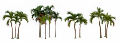 Naklejka Palm tree isolated collection on white background