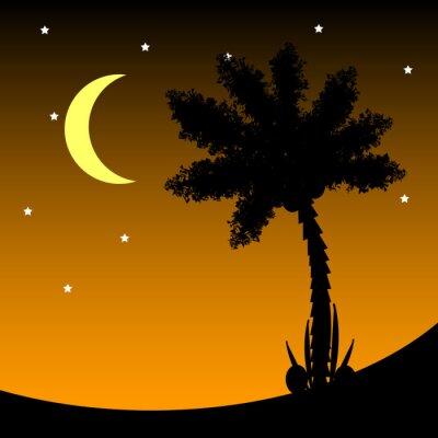 Naklejka Palma w nocy.